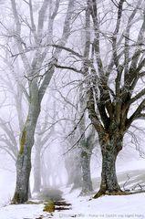 Eisiger Februar