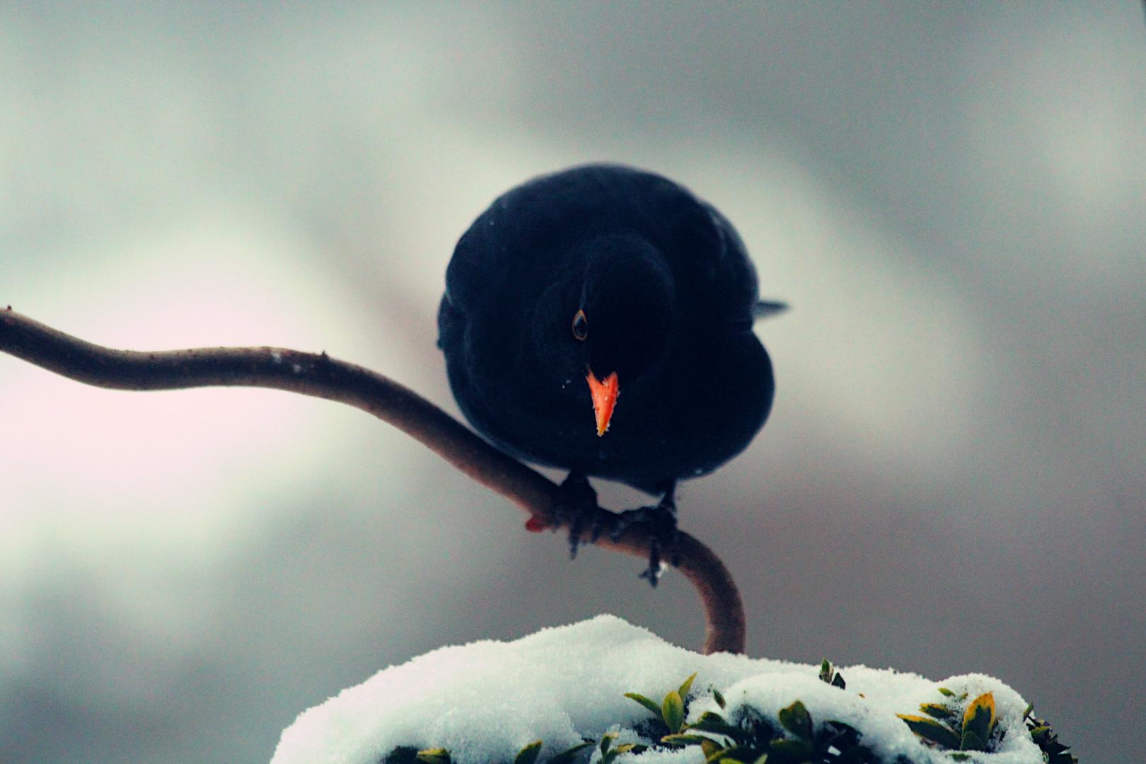 Eisiger Frühling
