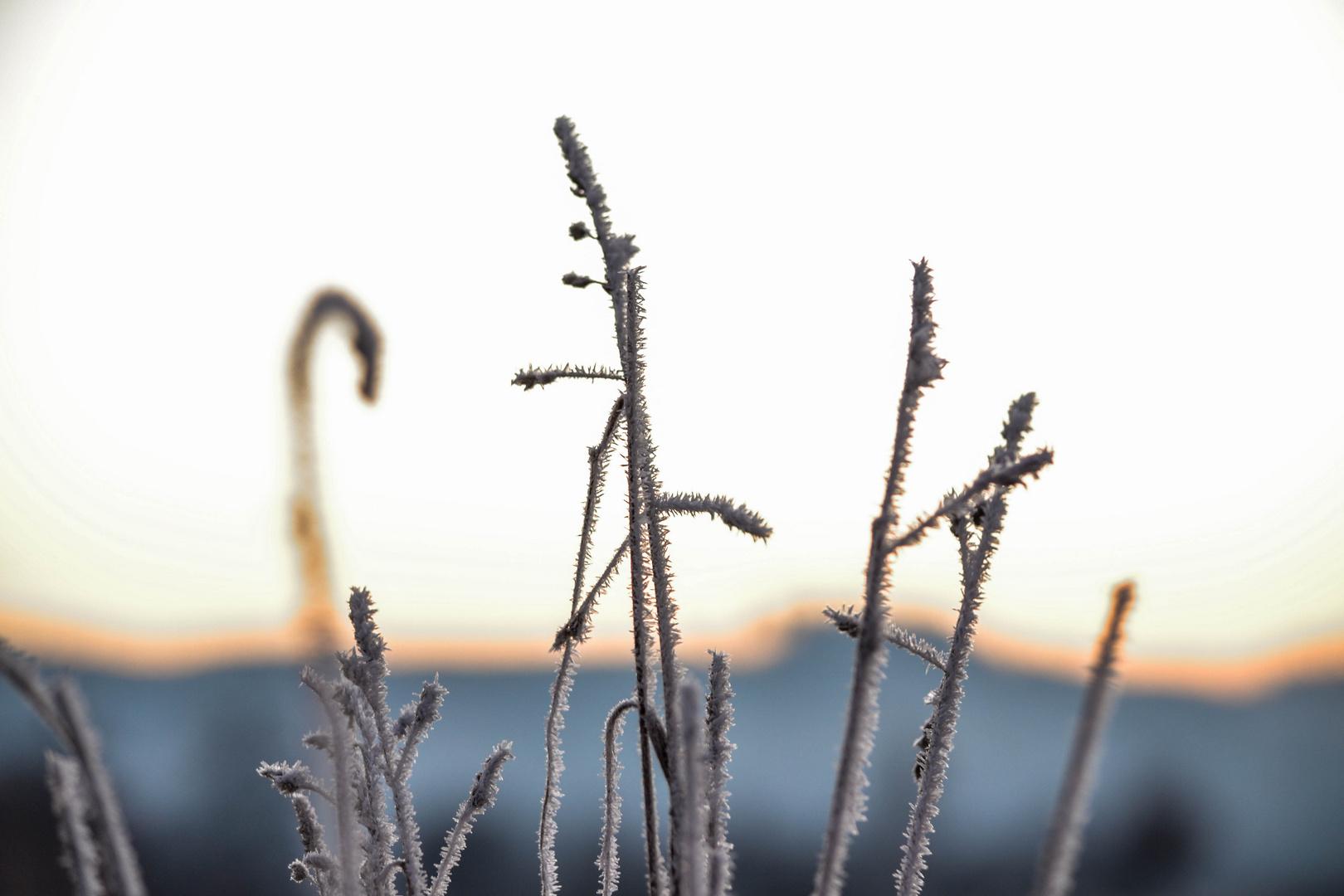 Eisiger morgen