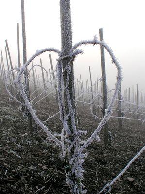 Eisiger Valentinstag