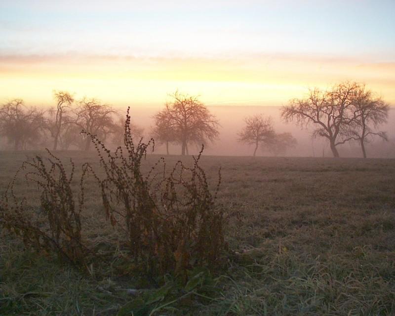 """Eisiges Morgen - """"Grauen"""""""
