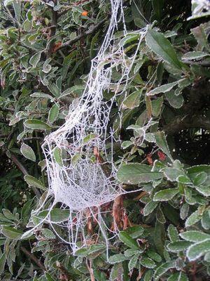 eisiges Spinnennetz