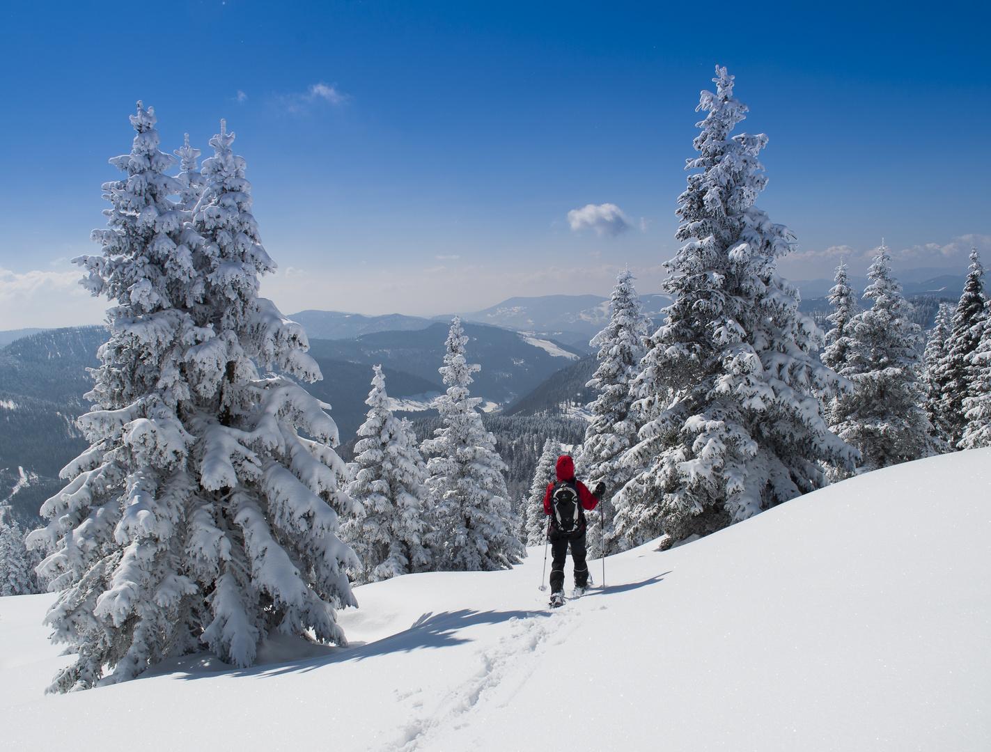 Eisigkalt im Schwarzenwald