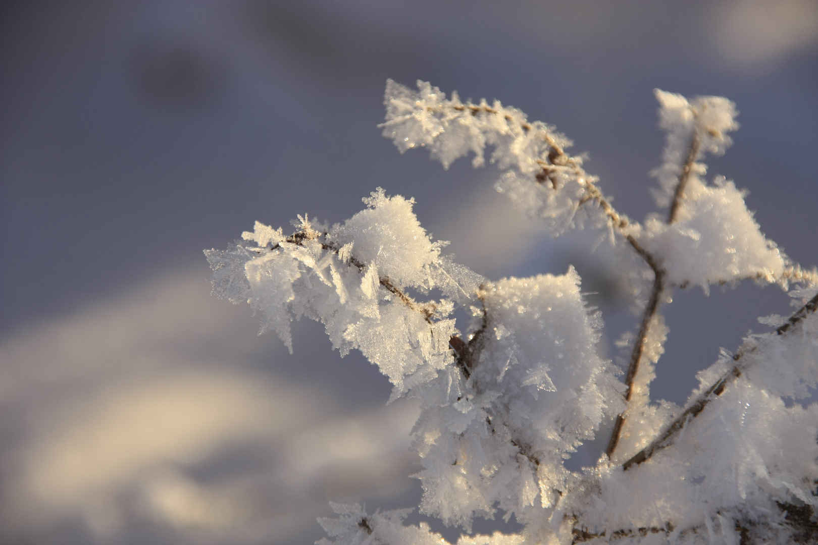 Eiskalt
