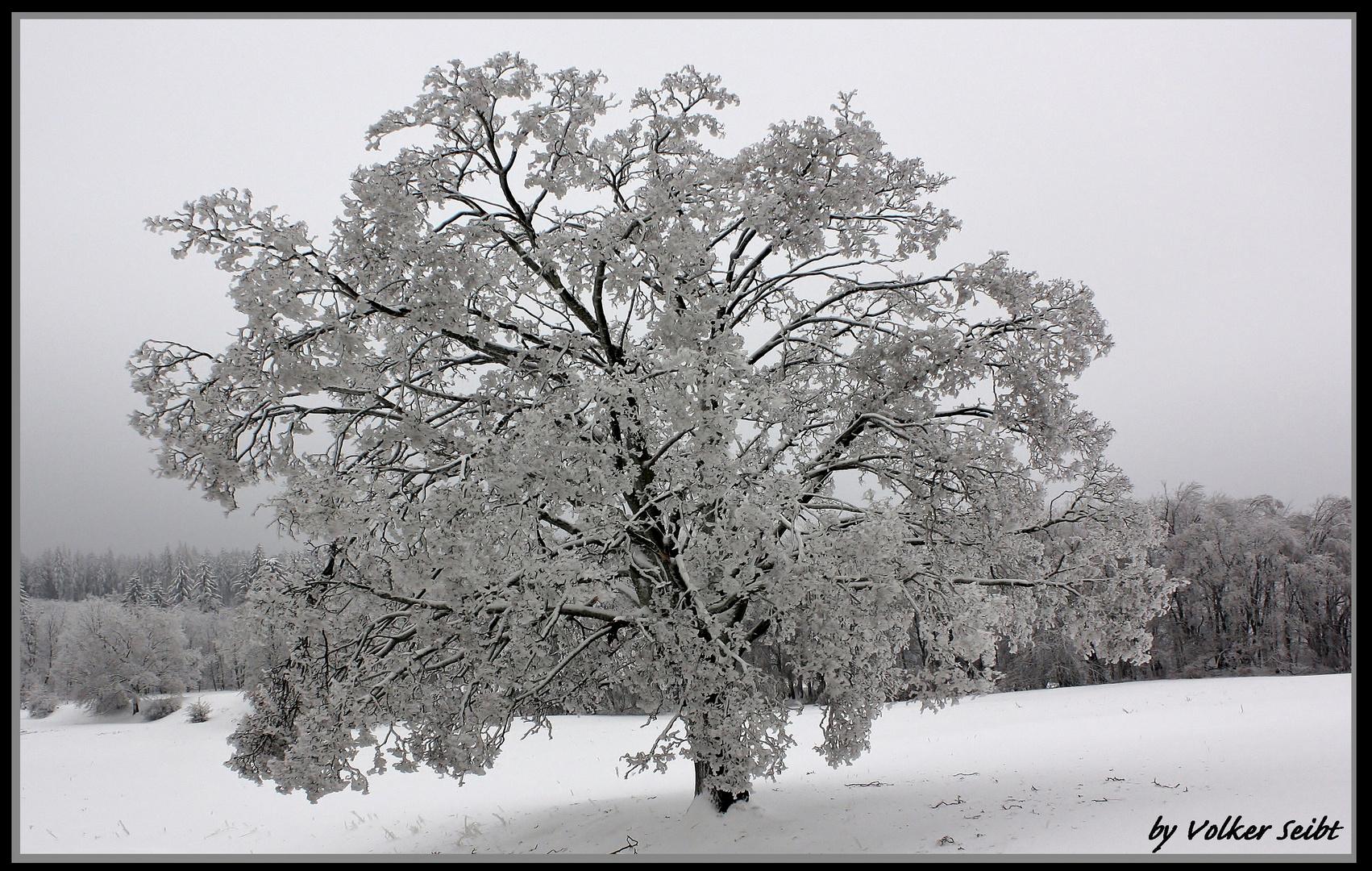 Eiskalte Einsamkeit