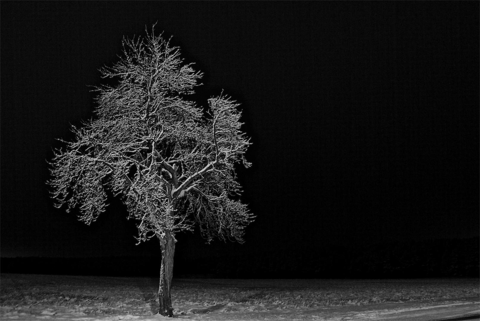Eiskalter Baum