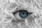 eiskalter Blick