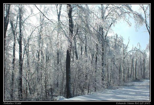 Eiskalter Wald