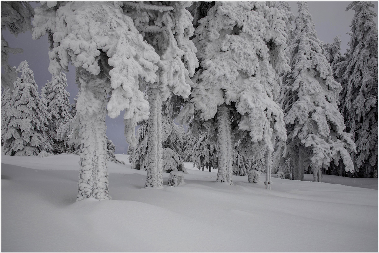 Eiskalter Winterwald...