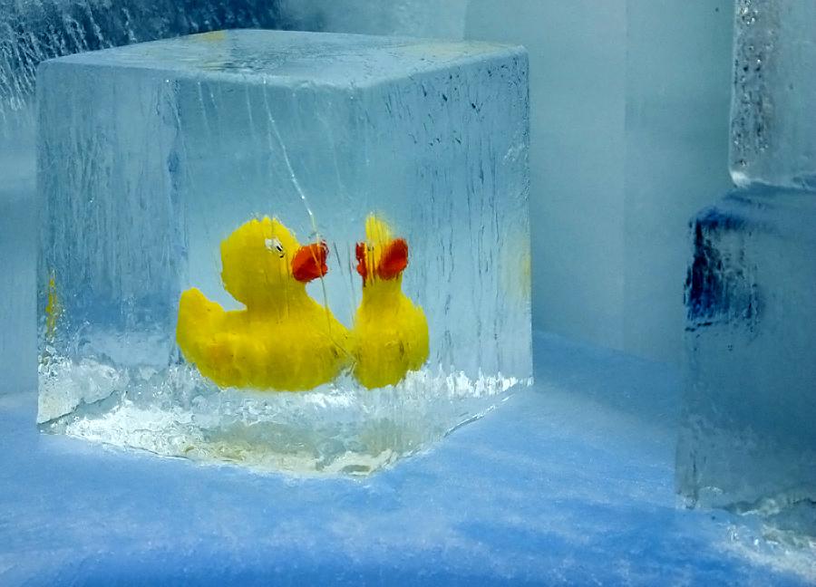 Eiskaltes Entchen
