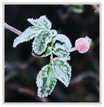 Eiskaltes Früchtchen II - Serie II