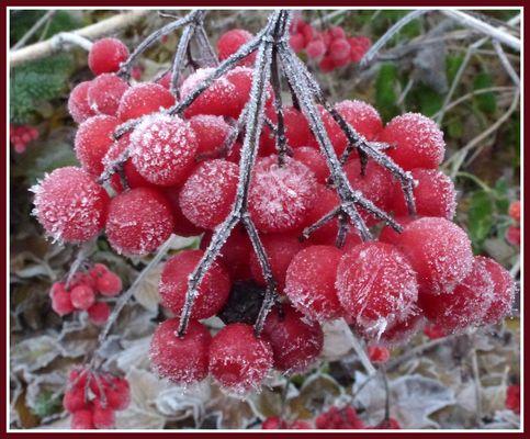 -Eiskristalle am frühen Morgen-