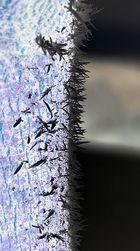 Eiskristalle an einem Baum