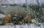 Eiskristalle auf der Wasseroberfläche
