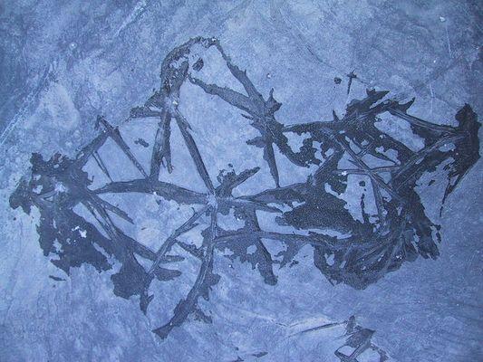 Eiskristalle auf Schieferplatte