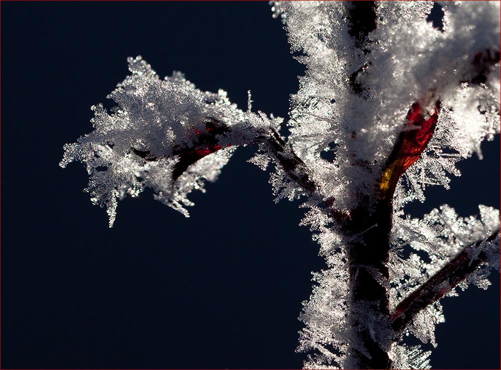 Eiskristalle im Gegenlicht