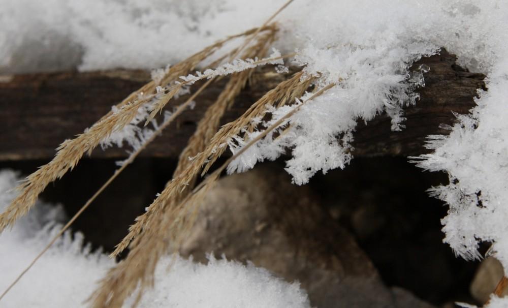 Eiskristalle & Weizen