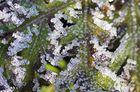 Eiskristalle.....durch Zufall gesehen