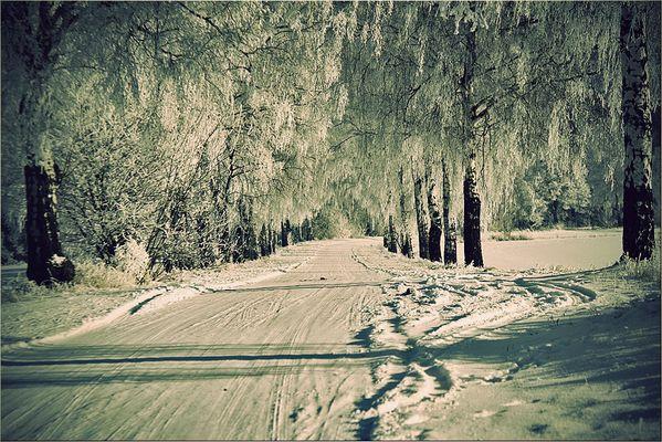 [ Eisland ]