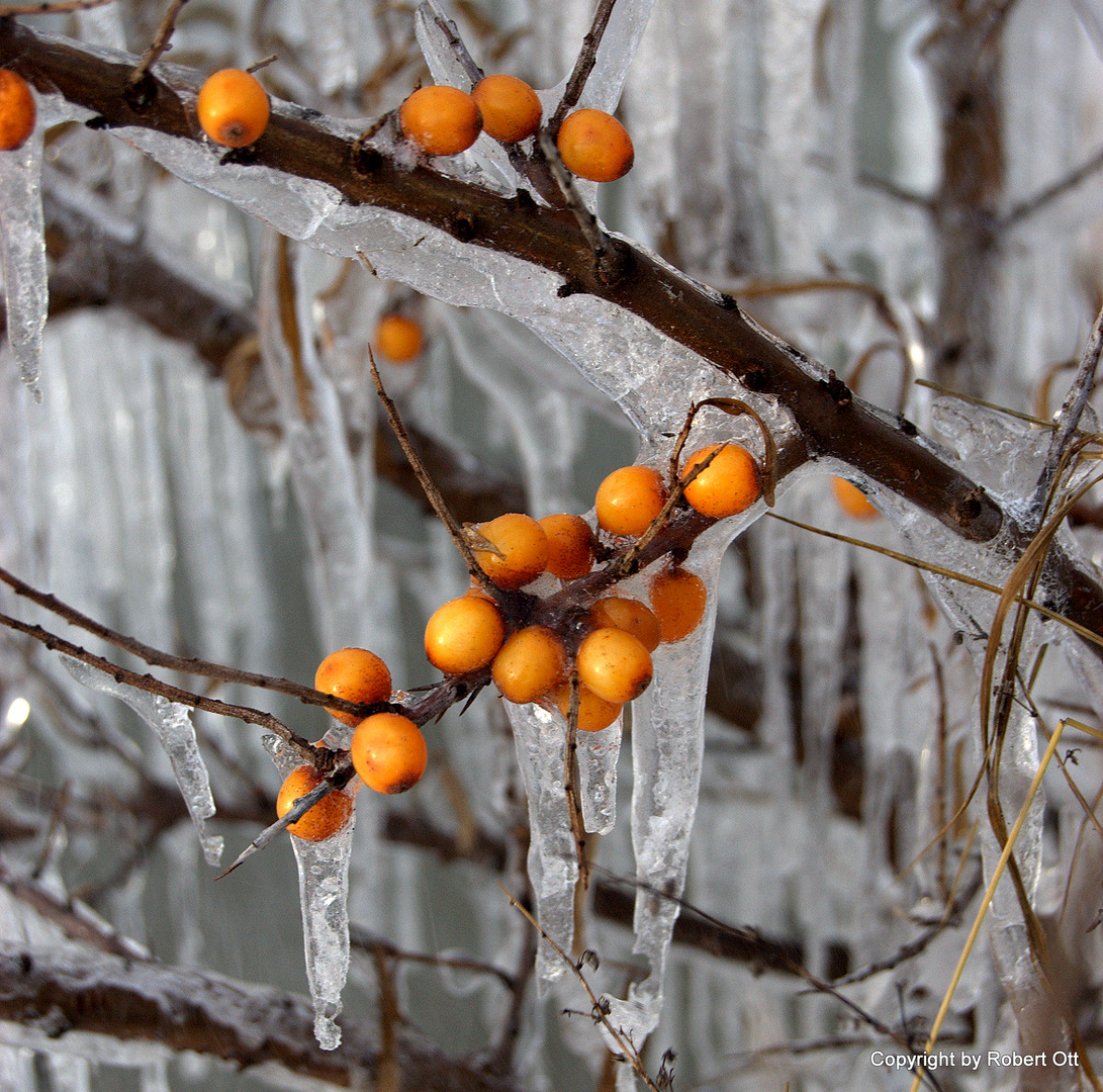 Eisregen und Schneesturm hat Hiddensee voll in griff