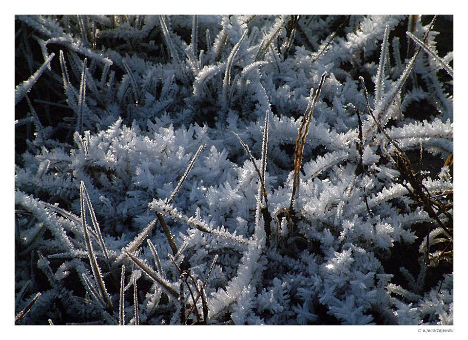 Eis(Salz-)wiese auf Baltrum am Neujahrstag