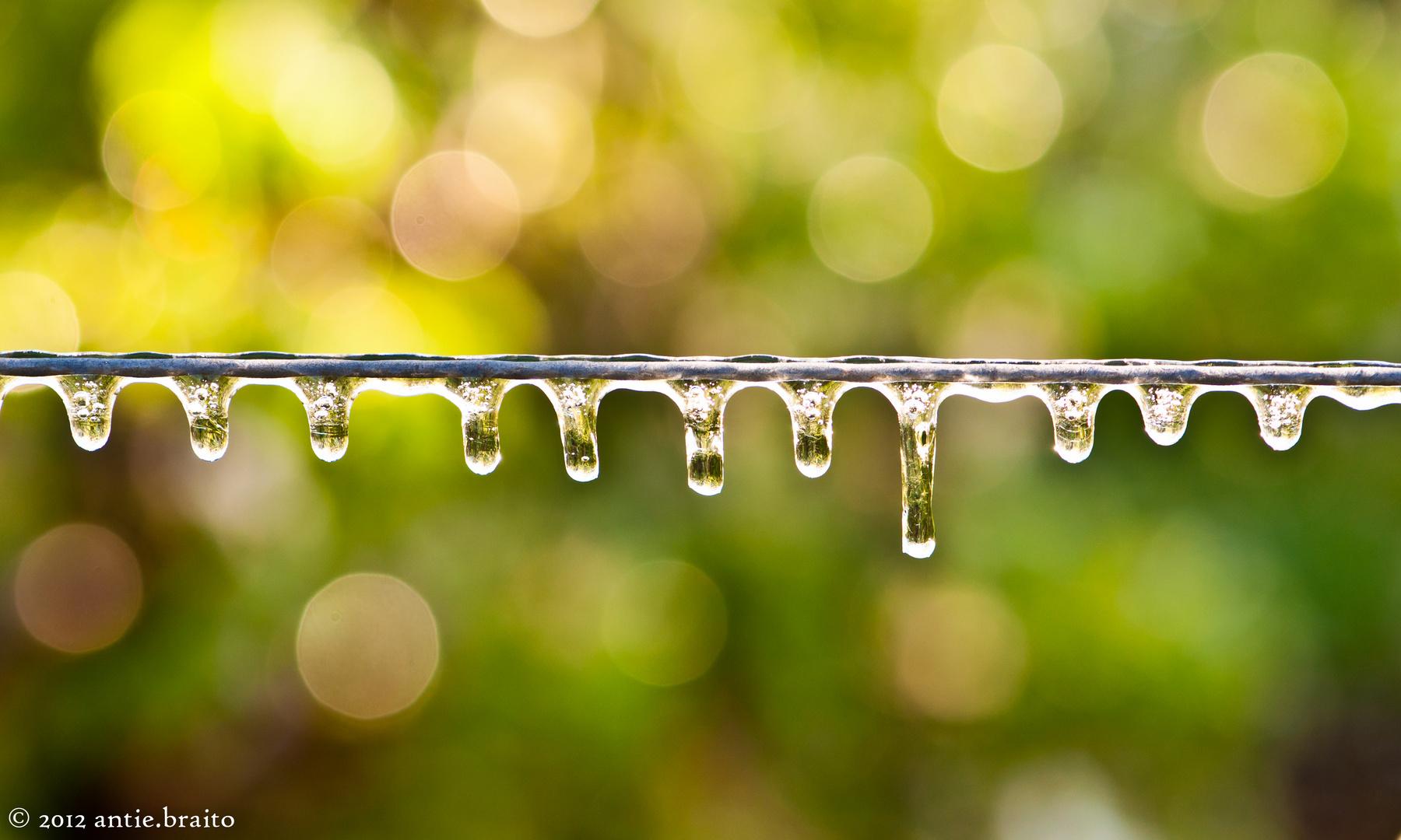 Eisskulpturen in der Natur _ Frostberegnung