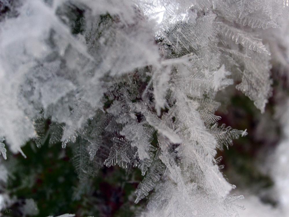 Eissternchen (2)
