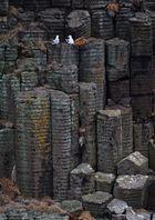 Eissturmvögel auf Basaltfelsen