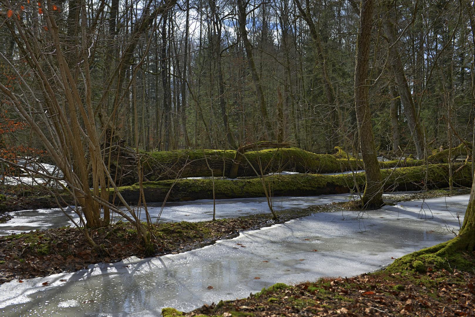 Eiswald