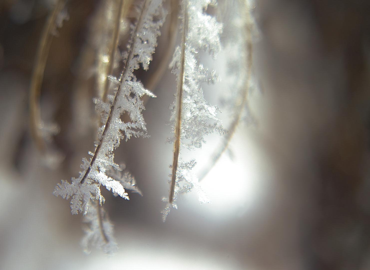 Eiswelten2