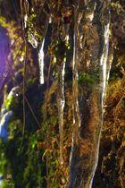 Eiszapfen im Märchenwald