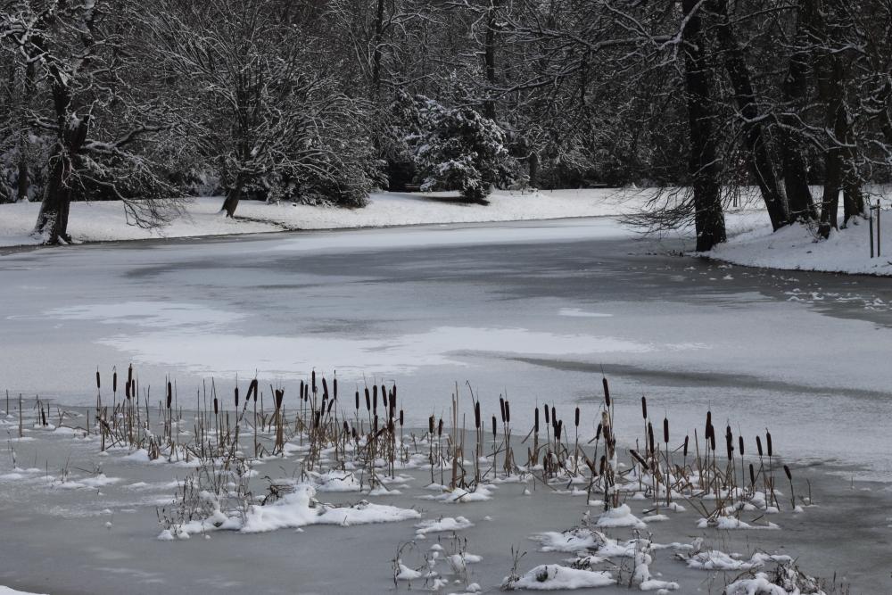 Eiszeit im Luisium I