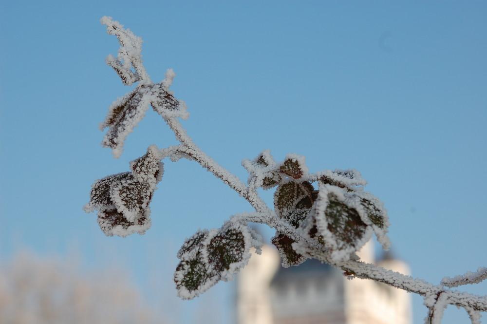 Eiszeit im Rheingau