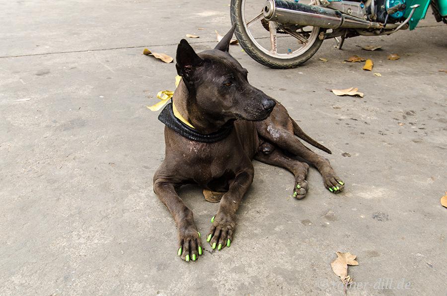 Eitler Straßenhund