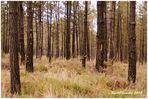 Ejército de árboles 2