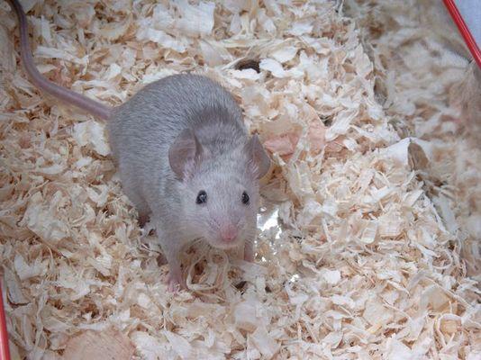 Ekelig? Mal ehrlich kann man so einer Maus weh tun?