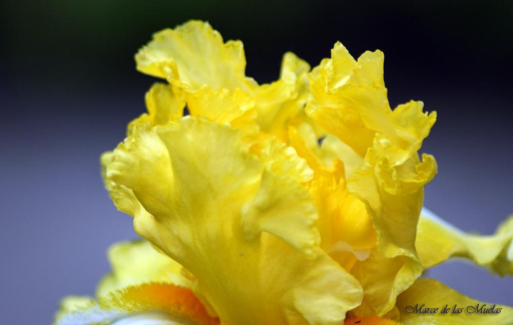 ...el amarillo...