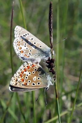 El amor de las mariposas
