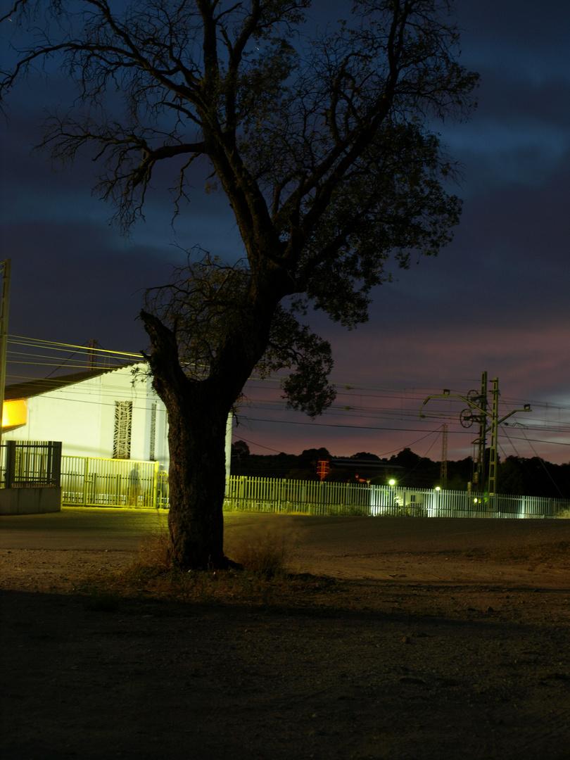 El árbol de la noche