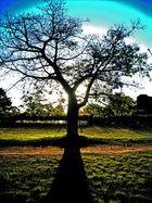 """""""El árbol de la vida """""""