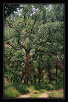 El árbol de la vida...para Teresa Pascual