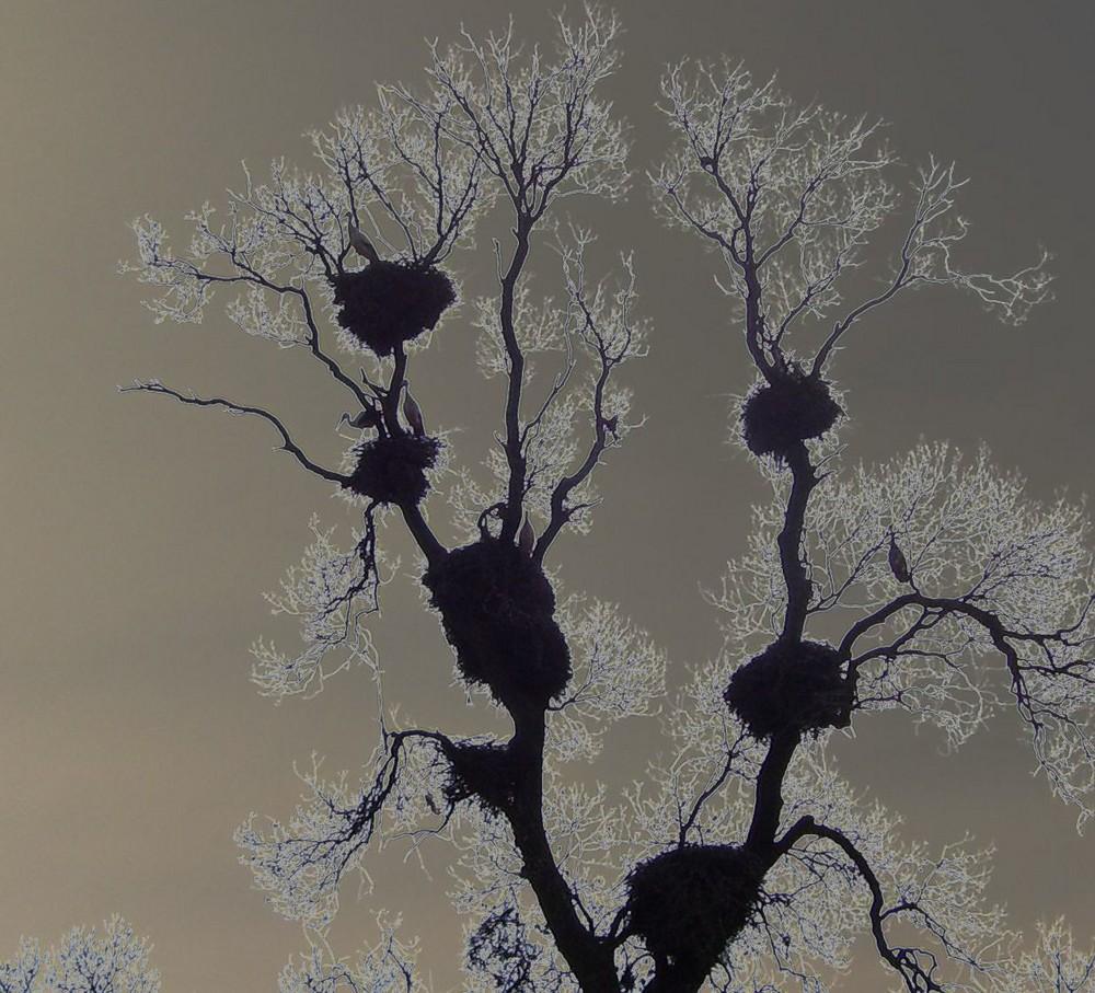 El árbol de las cigüeñas...FERNANDO LÓPEZ   fOTOGRAFÍAS...