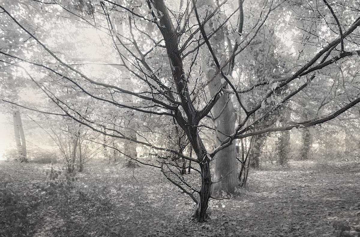 """""""El árbol negro"""""""