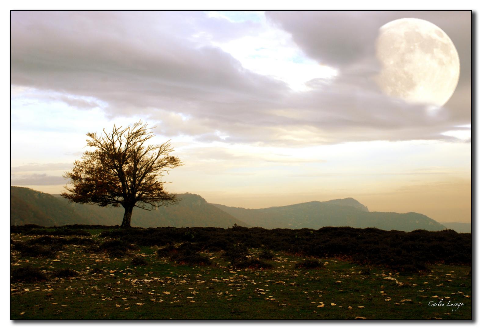 El árbol se enamora de la luna