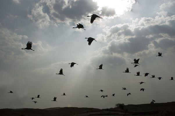 El baile de las aves migratorias