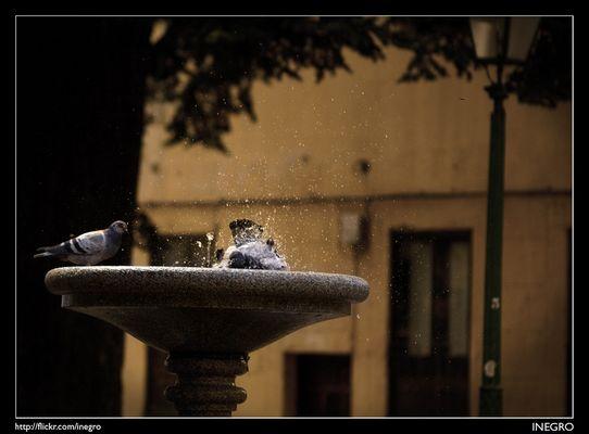 El baño de las palomas, el tercero en discordia... y el cuarto en camino