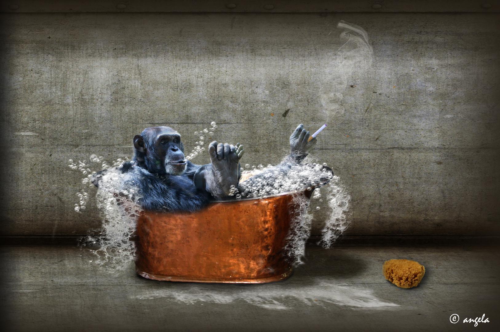 El baño del gorila