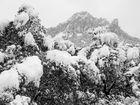 El blanco y negro del invierno