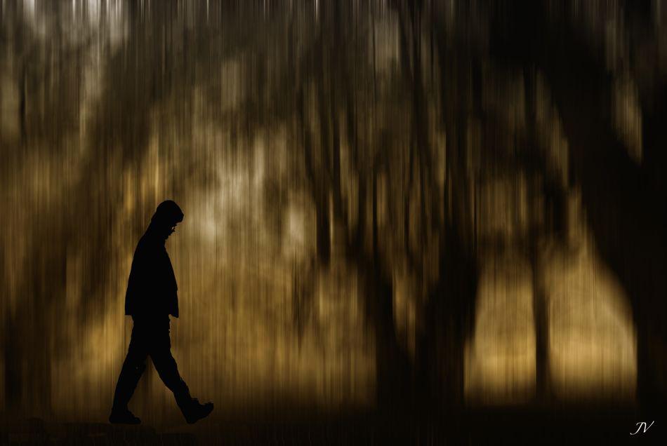 ..el bosque