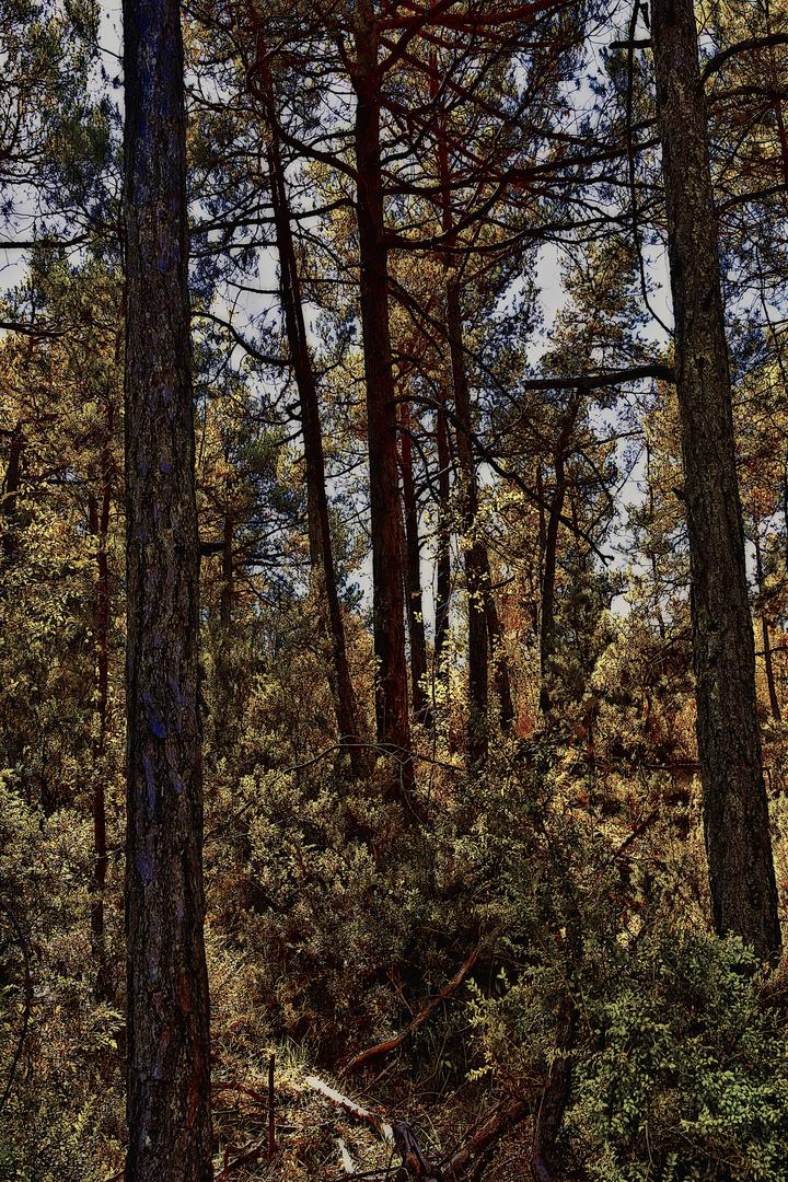 El Bosque Cálido
